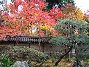 京都紅葉03