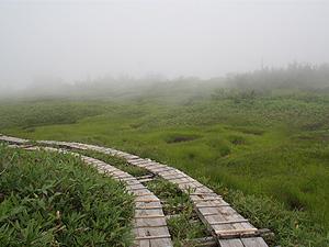 夏期休暇(湿原)