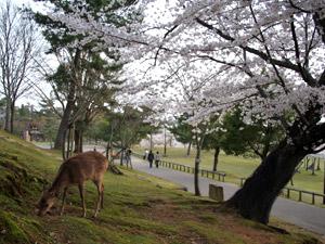 花見2006_03