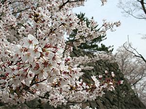 花見2006_01