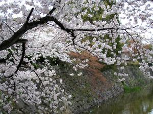 花見2006_02