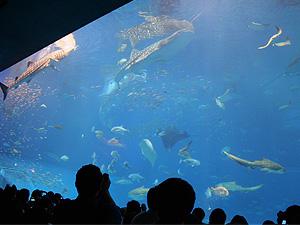 沖縄(水族館)