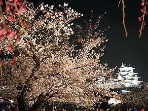 姫路城の桜3